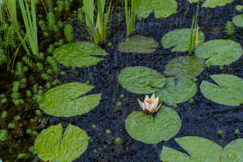 RAIN meditation