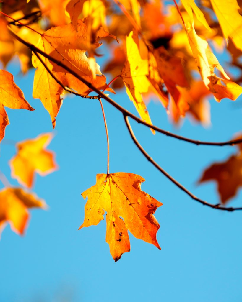 A leaf lets go easily when the time is right.  May we mirror the ease with which it does that.